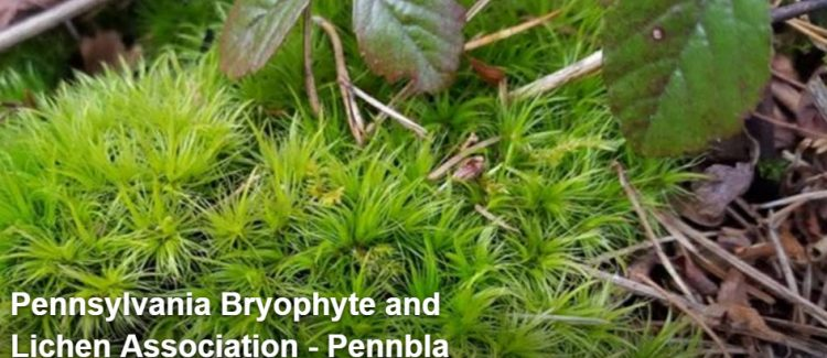 The Pennsylvania Bryophyte and Lichen Association.