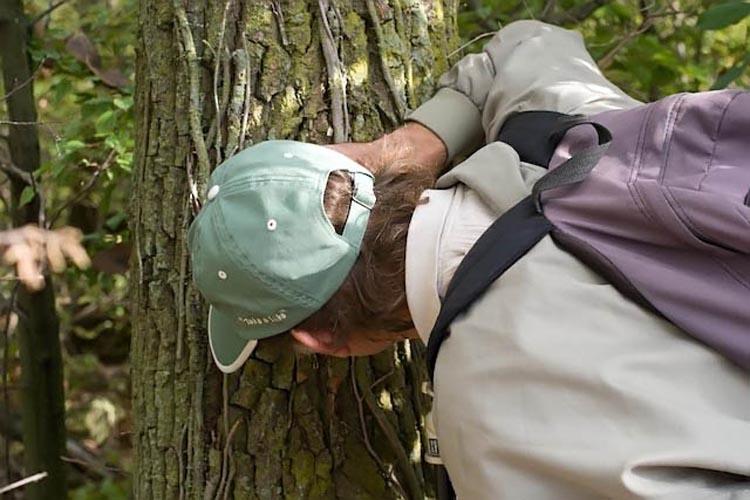 dave-lichen-corticolous-2008