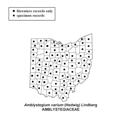 Amblystegium-varium-simplemap