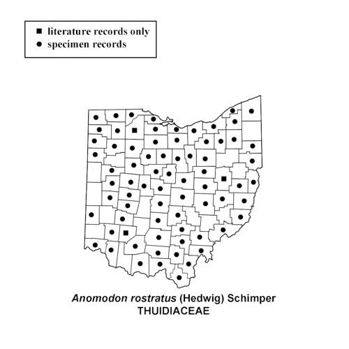 Anomodon-rostratus-simplemap