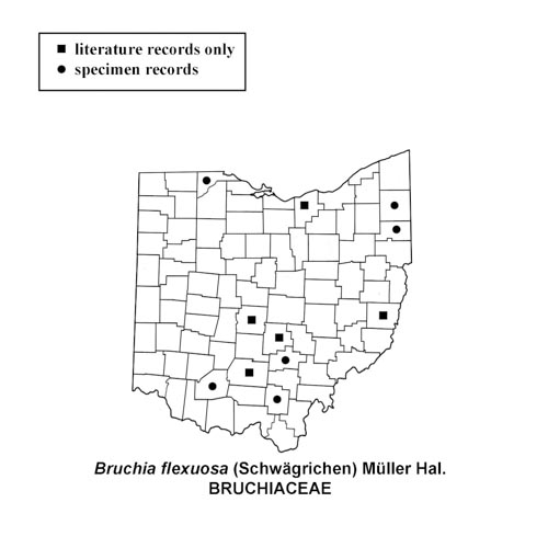 Bruchia-flexuosa-simplemap