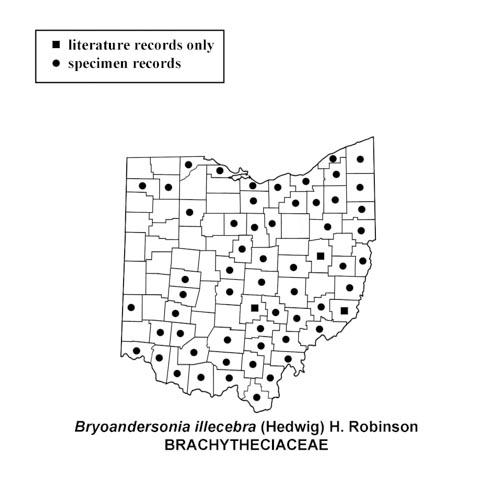 Bryoandersonia-illecebra-simplemap