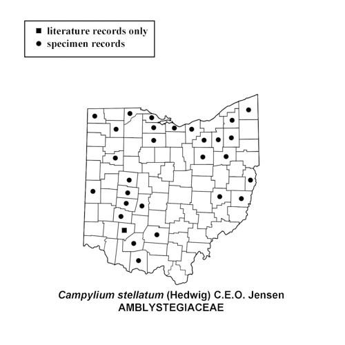 Orthotrichum-stellatum-simplemap