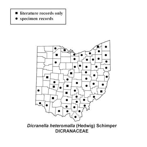 Dicranella-heteromalla-simplemap