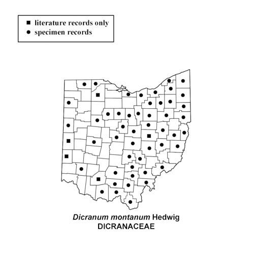 Dicranum-montanum-simplemap
