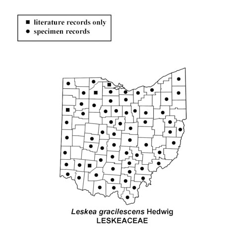 Leskea-gracilescens-simplemap