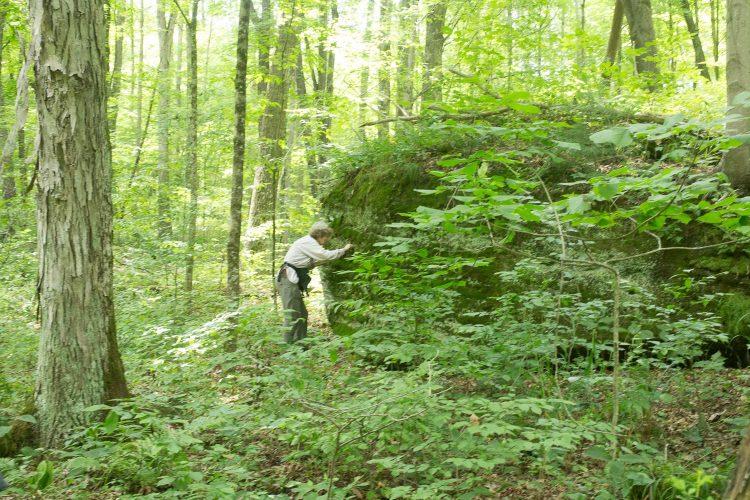 Looking for liverworts in a sandstone boulder.