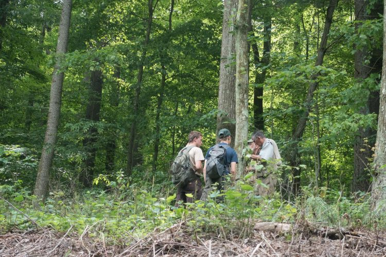 Lichenologists explore tree trunks in Carroll County. July 16, 2016.