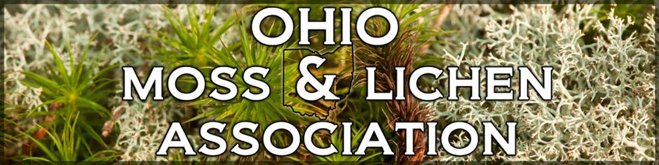 Ohio Moss and Lichen Association