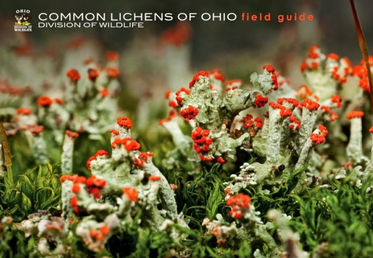 Lichen Guide Cover