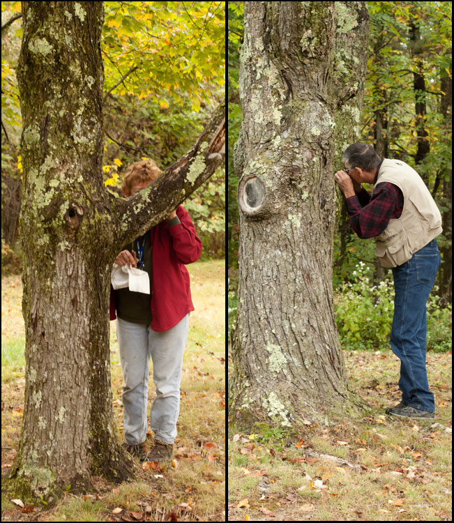 OMLA members inspect tree bark