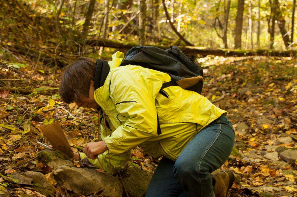 Janet collects saxicolous bryophytes off a non-rolling stone.