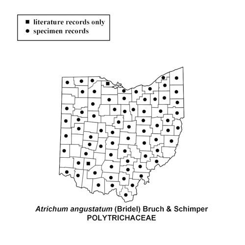 Atrichum-angustatum-simplemap
