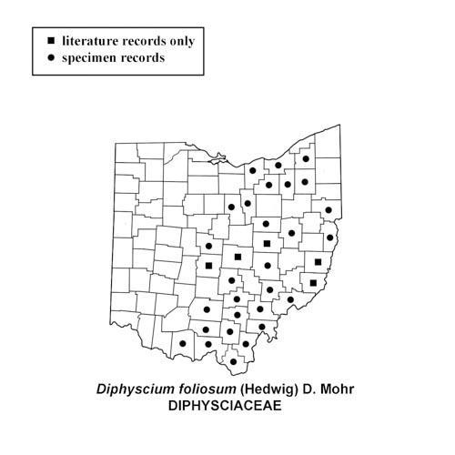 Diphyscium-foliosum-simplemap