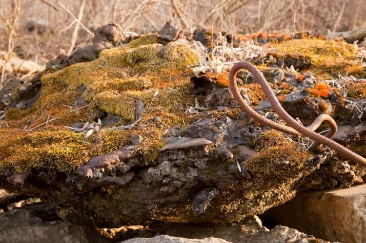 Entodon seductrix photo by Bob Klips