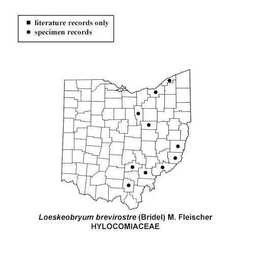 Loeskeobryum-brevirostre-simplemap